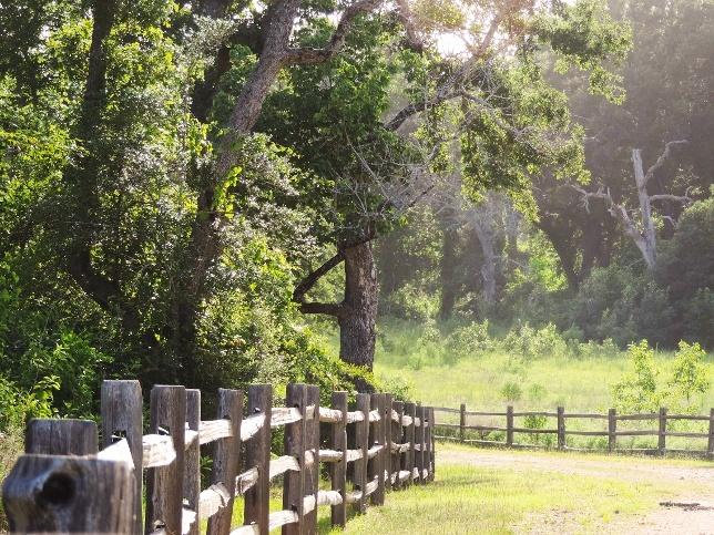 king-oaks-_fencecurve